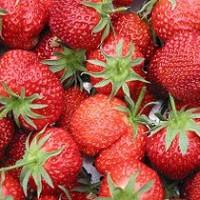 Bijzondere aardbeien