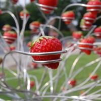 De Aardbeien-academie!