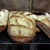 Nieuwe trend in bakkersland: speltbrood